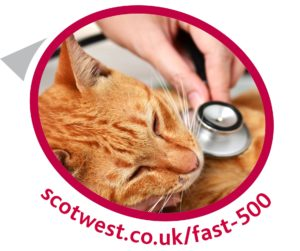 Link to Fast 500 Loan page
